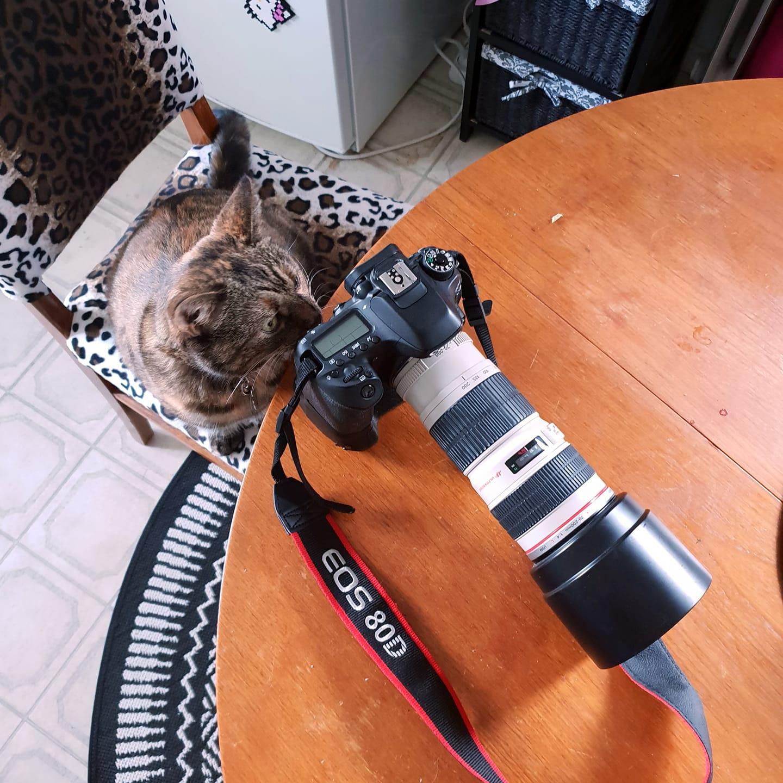 Drömmen om att bli fotograf