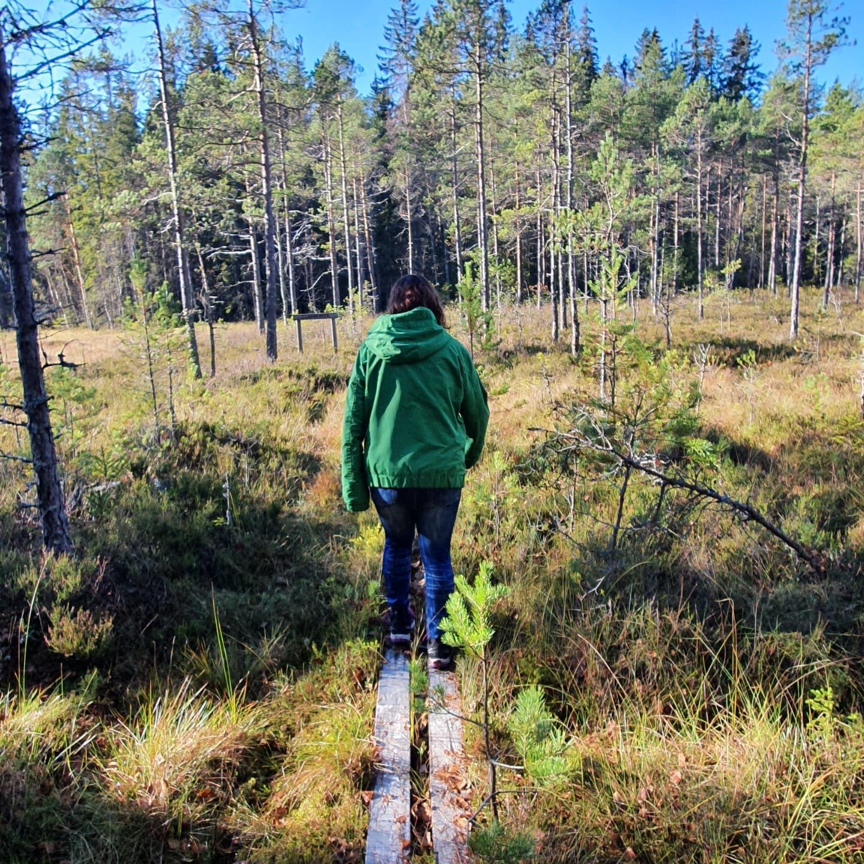 Skogsäventyr